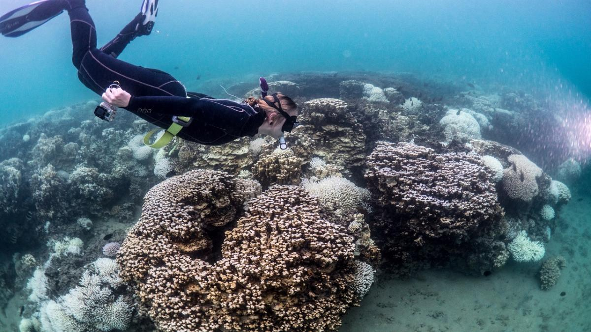 Image of scuba diver in coral reef