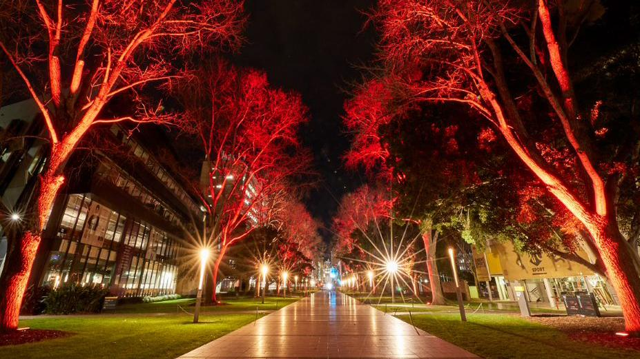 photo of path with red light on trees at night